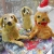 christmas dogs parsley pie art club children kids painting craft classes parties cheshire