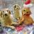 christmas dogs parsley pie art club children kids painting craft classes parties cheshire