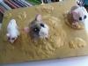 clay-hamsters-parsley-pie-art-club-childrens-paintings-kids-art-classes